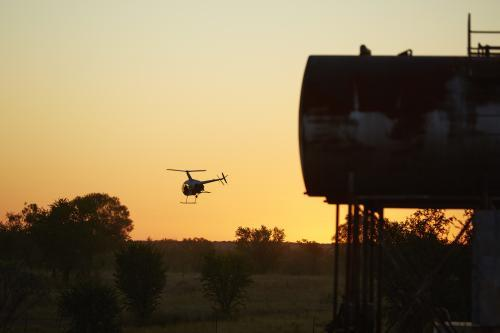 R22 mustering helicopter takes off near fuel tanks in dawn light.