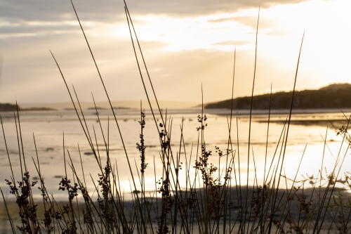 Reeds on the shore of the Wellstead Estuary at sunrise