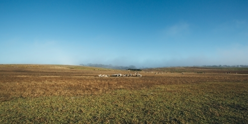 Remote landscape with livestock in the distance