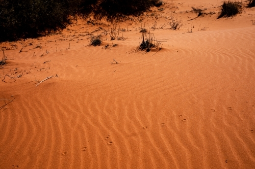 ripples in red desert sand