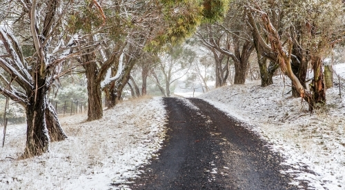 Road through snow covered trees and rural fields.  Australia