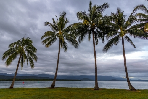 Rows of palm trees along coastline at dawn