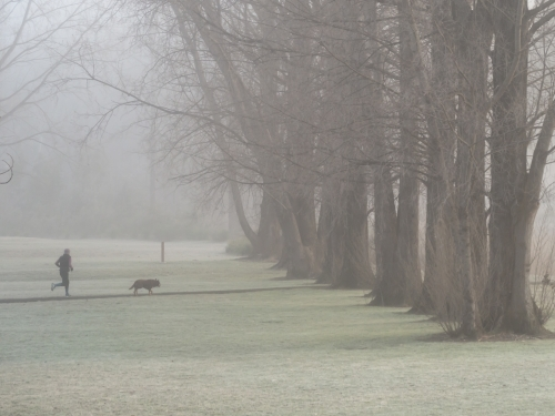 Runner and dog running towards big trees in the fog