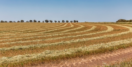 Rural scene in Western Australia with pattern formed by harvester in farmland