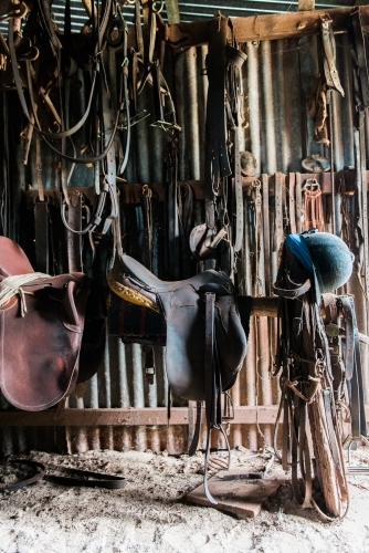 Saddles and bridles hanging in tack shed