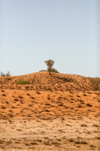 Sand dune with one tree
