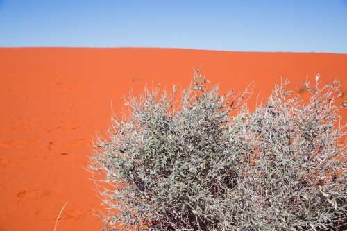 Sand dune with spinifex