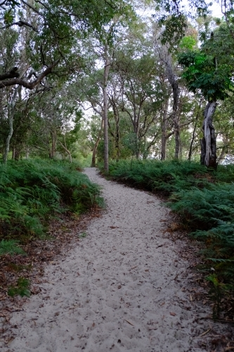 Sand track through the bush on South Stradbroke Island