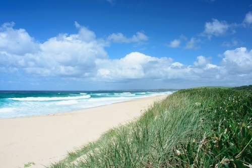 Sandy Beach with Blue Cloudy Sky and Green foliage in the foreground