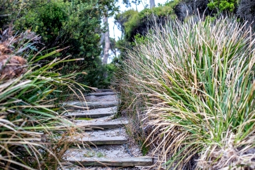 Sandy wooden steps lead up from the beach into the bush behind