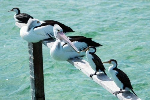 sea birds perched on railing over sea water