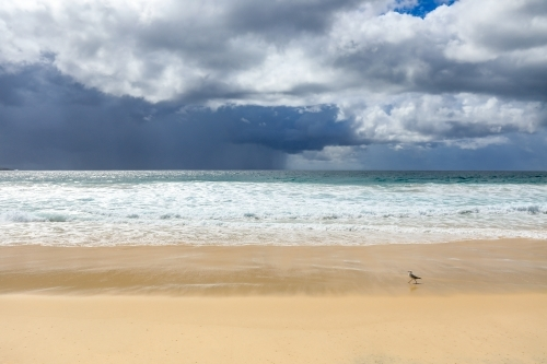 Seagull walking on sandy beach against stormy sky