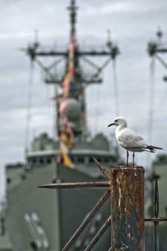 Seagull, with Navy Boat behind