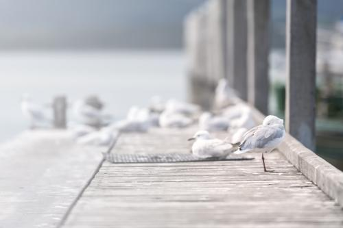 Seagulls on a jetty by the water