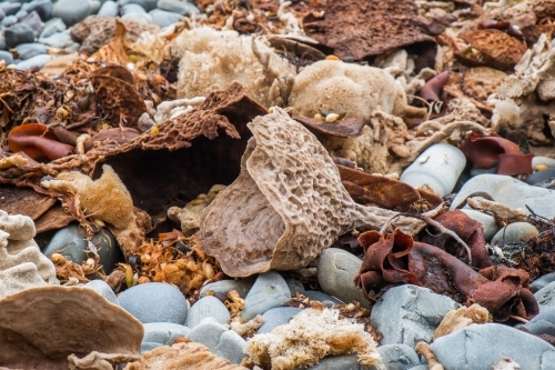 Seaweed, coral and rocks washed up on a beach