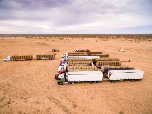 Semi-trailer trucks lined up and loaded with large hay bales for drought relief.