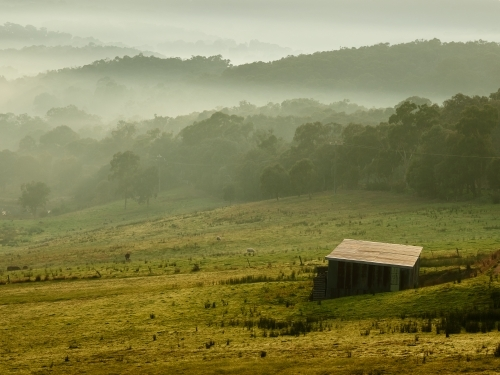 Shed on Farmland on Foggy Morning in Kangaroo Ground