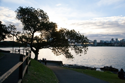 Silhouette of a tree at sunset at Mrs Macquarie's Chair, Sydney Harbour