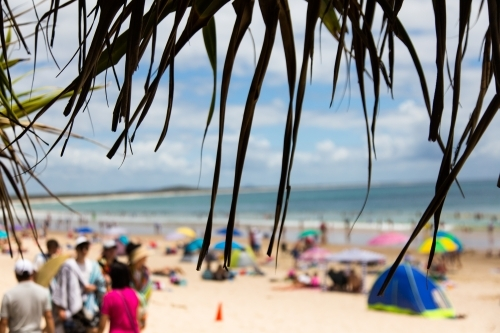 Silhouette of pandanus leaves in front of blurry shapes of a busy noosa main beach