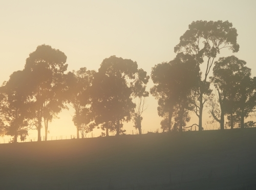 Silhouetted Trees on a Hill on a Cold Morning