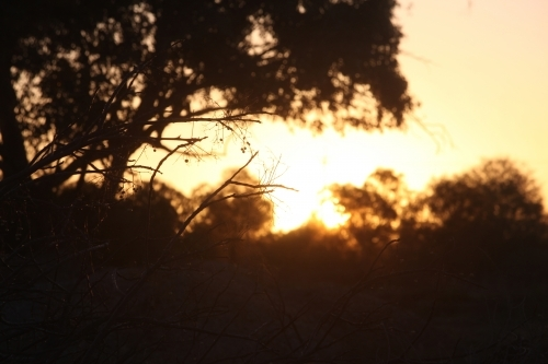Silhouettes of twigs and trees against a golden hour outback sunset