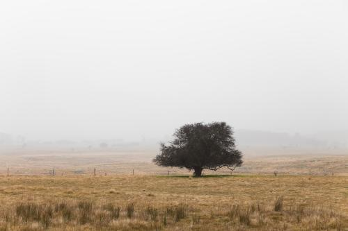 Single tree in remote landscape with mist