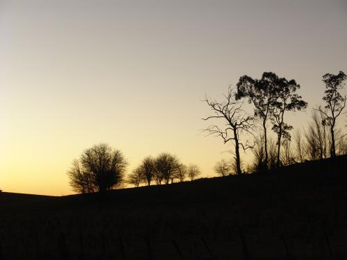 Skyline of silhouetted trees on a hilltop