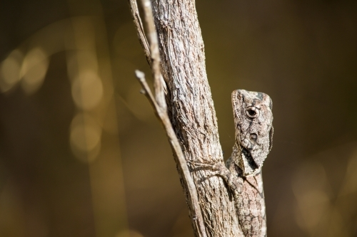 Small lizard on a branch