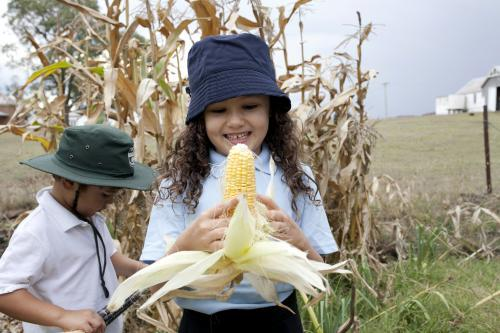 Smiling primary school girl holding freshly picked corn cob