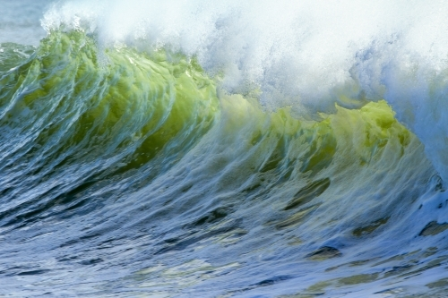 A green wave curls and breaks over Snapper Rocks.