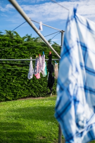 Socks and underwear hung on Hills Hoist washing line