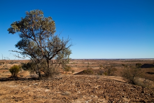 solitary tree on a brown plain under blue sky