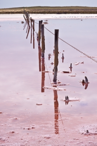 A rotting fence line strung across a pink salt lake