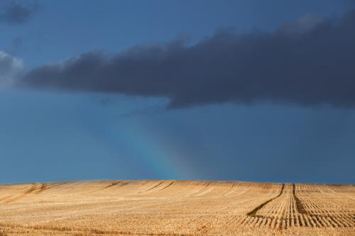 A rainbow arc and dark clouds over a paddock