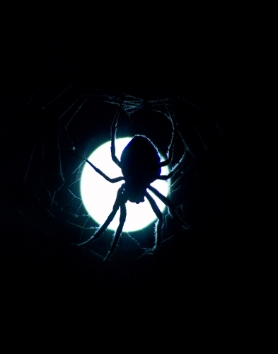 Spider in the moonlight