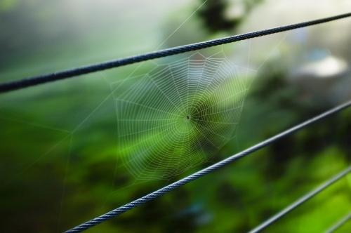 Spider Web on Wire Fence