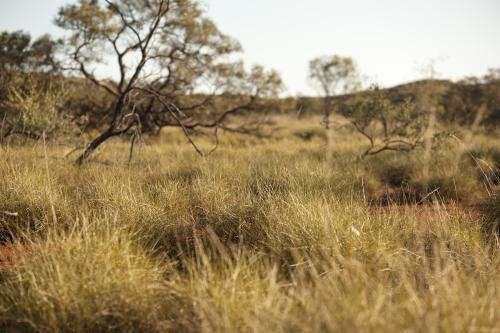 Spinifex bush land in Outback Australia