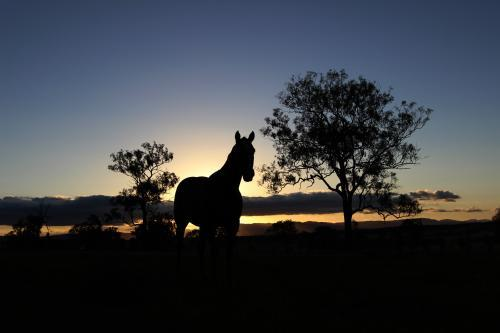 Standing Horse Silhouette Between Trees at Sunset