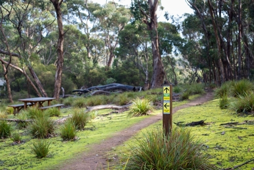 Start of bushwalking track with picnic table