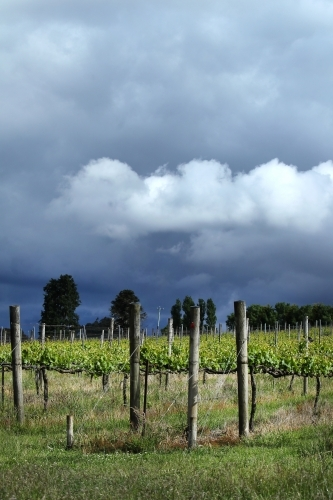 Storm clouds over vineyard in Macedon Ranges