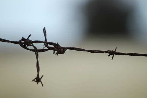 strand of rusty barbed wire  tied in a knot