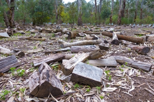 Stumps left on the ground after logging