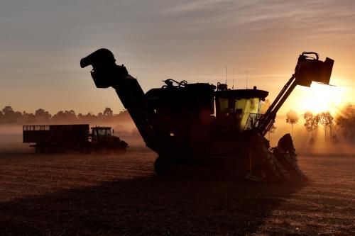 Sugarcane harvester & hopper in a misty field at sunrise