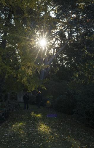 Sun through trees in overgrown garden where two people walk