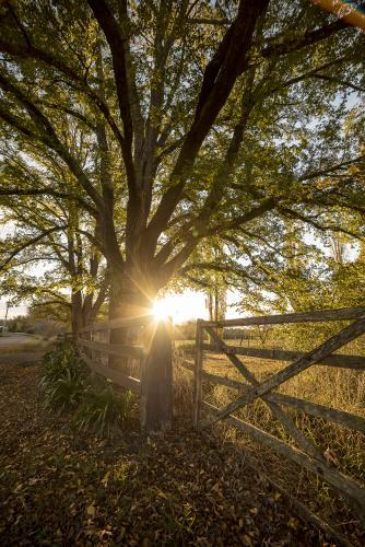 Sunburst over farm gate in autumn - portrait