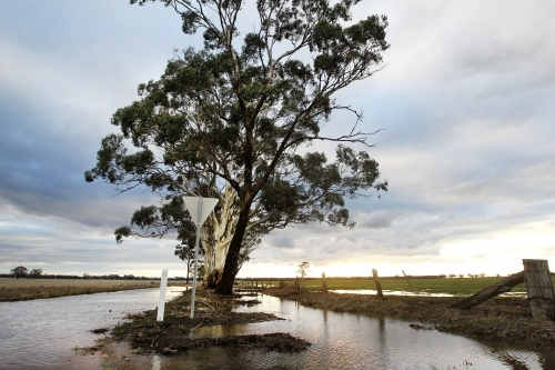 Sunlight on flooded paddocks and road