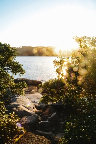 sunrise by the water with sun flare behind plants