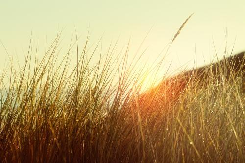 Sunrise through long grass