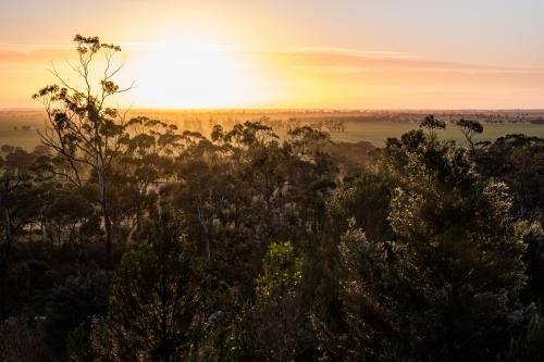 Sunrise through the undergrowth and trees, Mount Arapiles