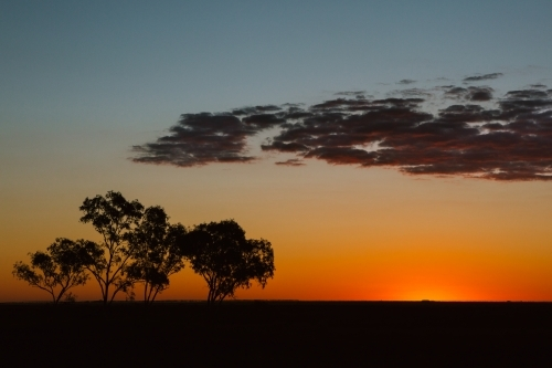 Sunset over Eucalyptus trees and a typical beautiful rural Australian landscape